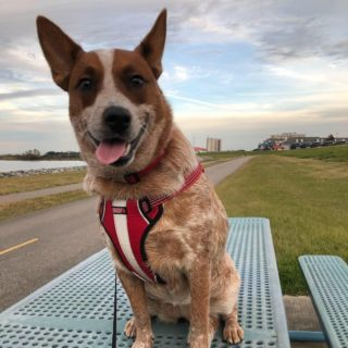 BARQS THE CATTLE DOG, New Orleans, LA, USA